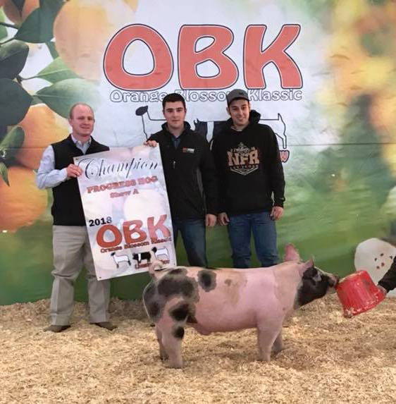 Orange-Blossom-Classic---Champion-Progress-hog-show-A