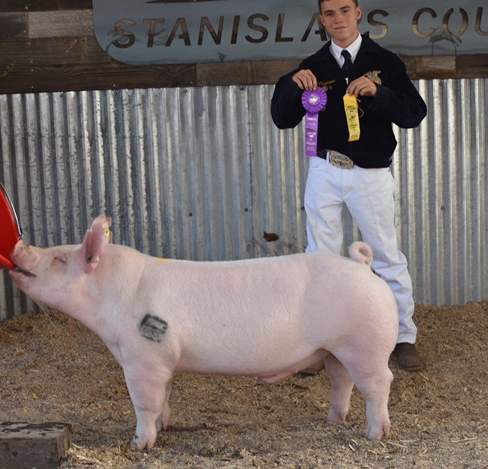 FFA-Champ-York---Stan-Co-2018