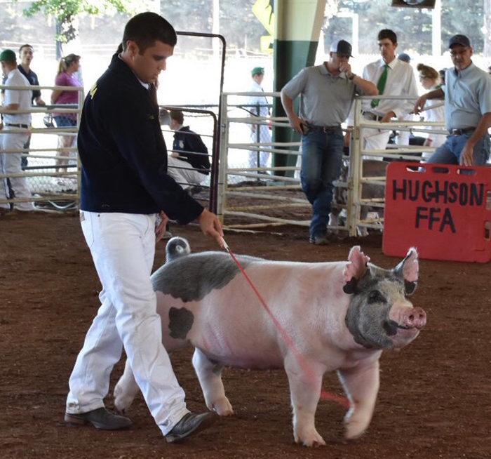 class-winner-breeding-show