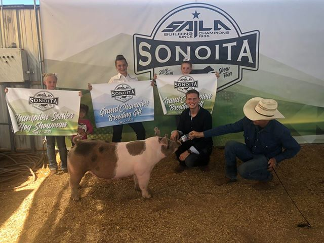Grand Breeding Gilt day 1 & 2. Sonoita Jackpot